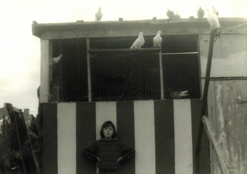 A First Class Pigeon Loft