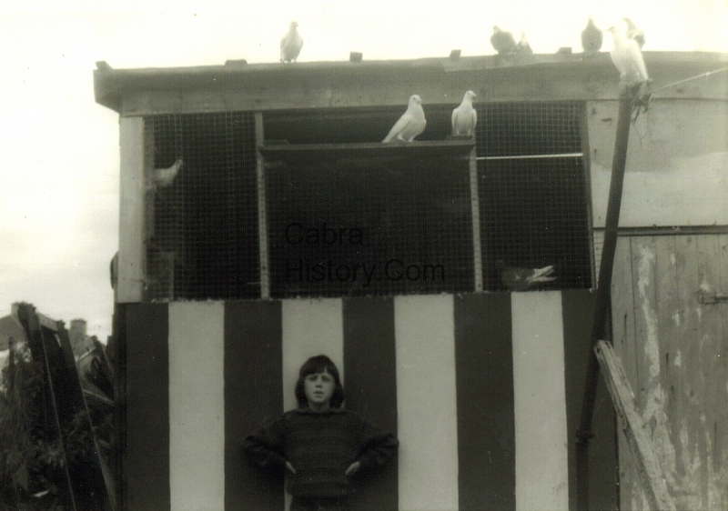 The pigeon loft