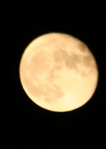 November Moon (3)