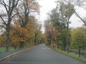 The Park (1)